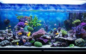 Que tal ter um aquário em casa?