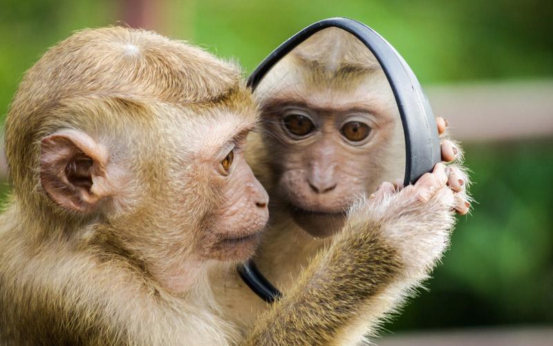 Mais proezas maravilhosas de macacos